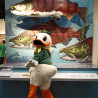 GO DUCKS! Weekends at the museum