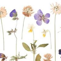 Pressed Flower Bookmark Craft