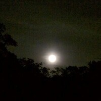 Howl at the Moon Hike