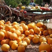 Fall Harvest Festival at the UCSC Farm