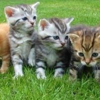 Animal Welfare Committee Meetings