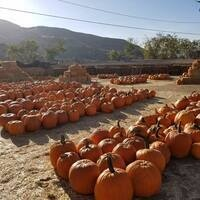 Gilchrist Farm Harvest Festival & Pumpkin Patch