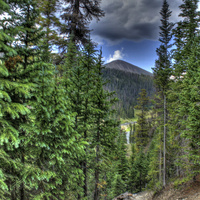 CSTPR Seminar: How Science and Society Will Shape Future Forests