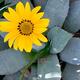 Desert Community Garden Day