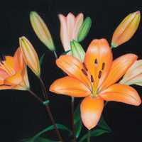 Vivid Lilies on Sanded Paper with Mandy Peltier