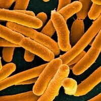 Microbiology Seminar Series