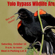 First Yolo Bypass Wildlife Area Public Tour of the Season