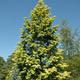 Fall Tree & Shrub Sale