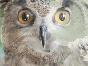 Annual Audubon Day
