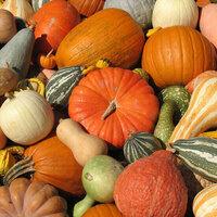 ECO's Oktoberfest