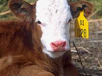 Chester Livestock Educational Meeting