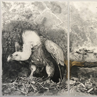 Exhibiting Artist Talk: HUMAN NATURE by Carla Stetson (faculty, Art, Education)