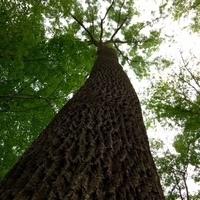 Tree Pruning 101