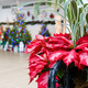State Botanical Garden Holiday Open House