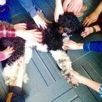 Maisy's Group