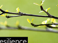 Resilience in our First Responder Community: FREE Training Event