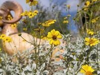Wildflower Workshop - Morning