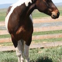4-H Horse Advisory Meeting