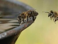 Science Pub: Bees!