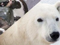 Pub Talk: Polar Bears and Penguins