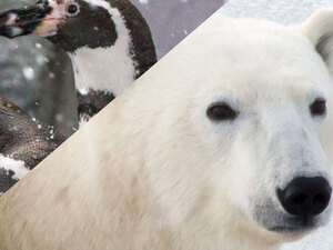 Pub Talk: Polar Bears and Penguins