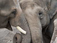 Pub Talk: Living with Elephants