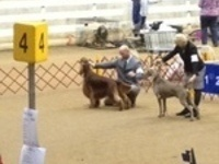 Clemson Kennel Club AKC Dog Show