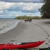 Wild Horses and Seashores - A Warm Winter Break Sea Kayak Adventure
