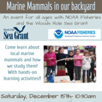 Talk: Marine Mammals in Our Backyard