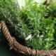 An Introduction to Garden Herbalism