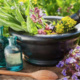 Garden Herbalism for Digestive and Respiratory Health