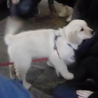 De-stress with a Dog at IC Library