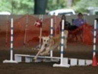 Atlanta Golden Retriever Club Agility Trial