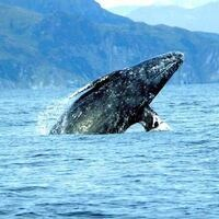 Whale Watching Week Dec 27-31