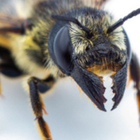 Bee School: Native Bee Taxonomy Course
