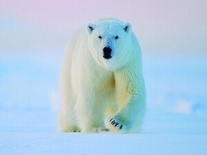 National Geographic Live - Into the Arctic Kingdom
