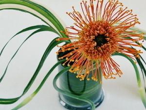 Mindfulness Series: A  Taste of Spring - Ikebana Floral Design Workshop