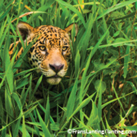 """""""Land of the Jaguars: Wild Wetlands of South America""""—A New Presentation by Frans Lanting and Chris Eckstrom"""