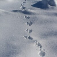 Tracks and Traces: Family Discovery