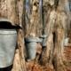 Home Sweet Home: Backyard Maple Sugaring