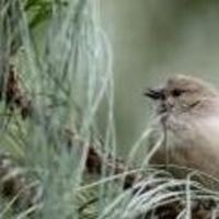 Birds in Davis: Out and About