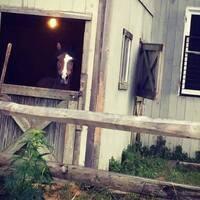 White Stone Equestrian