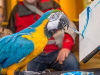 Pub Talk: Training Animals for Better Welfare