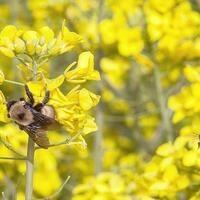Pacific Northwest Pollinator Summit & Conference