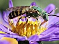 Pollinators of the Coachella Valley