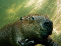Beaver Day