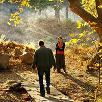 Film: The Wild Pear Tree
