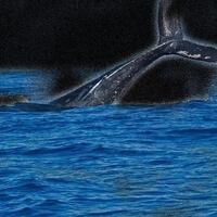 Experience Your Ocean, My Ocean (YOMO)