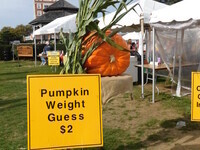 38th Annual Montauk Fall Family Festival, Day 2