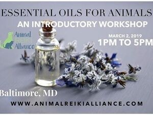 Essential Oils for Animal Companions